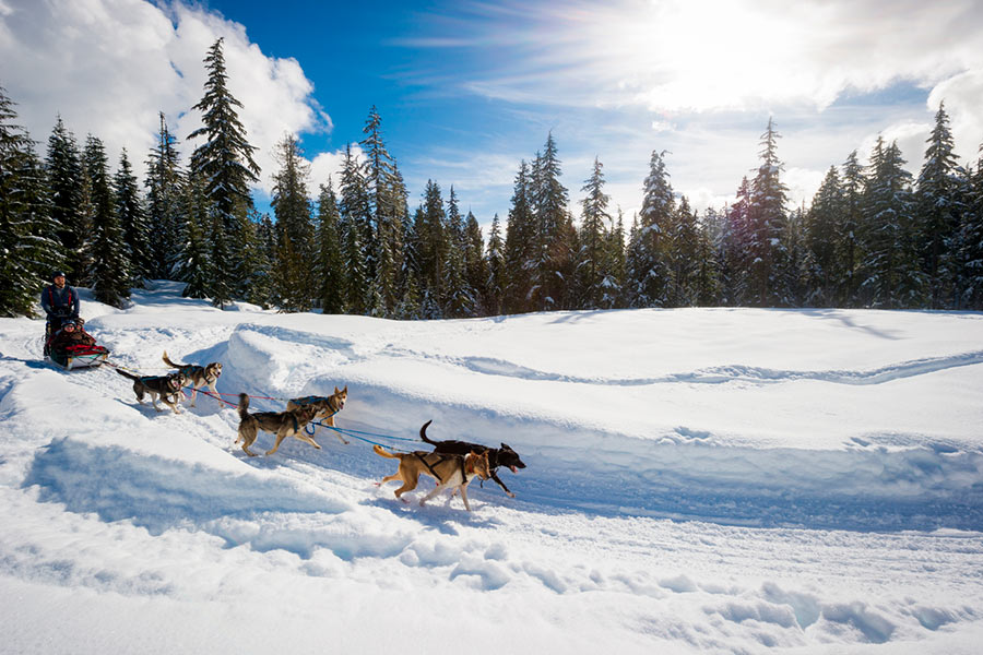 About-Whistler-trineo-con-perros