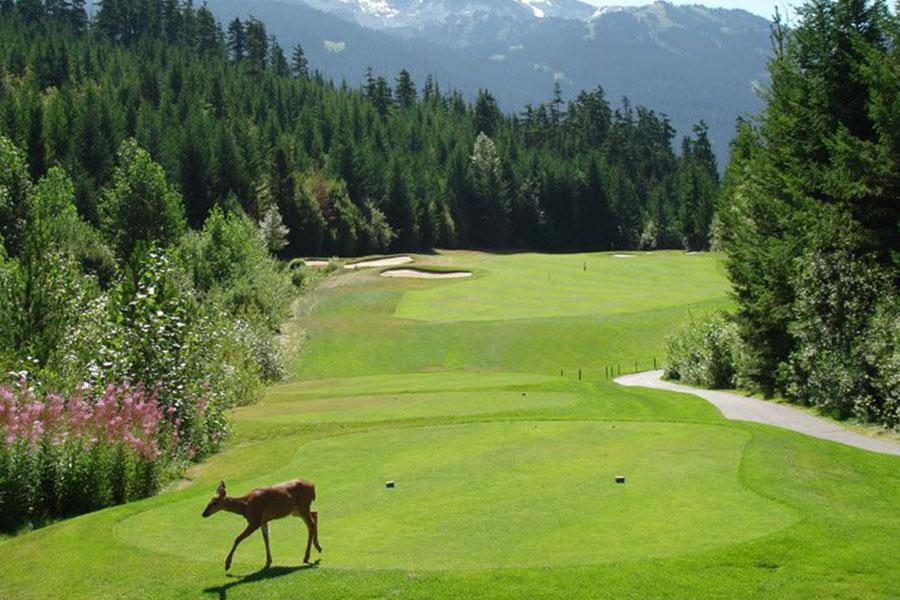 golf-en-whistler